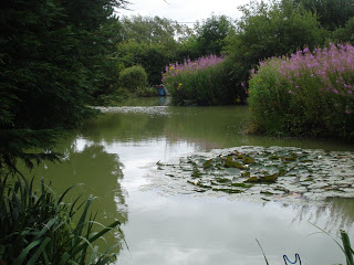 pond-July-19th-09