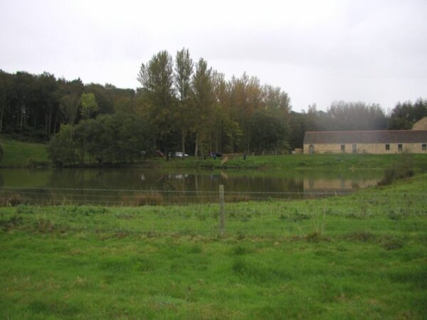 Dillington Pond